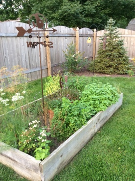 My herbs are OUT of Control! :)